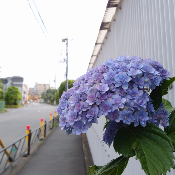 001_P6016116.jpg