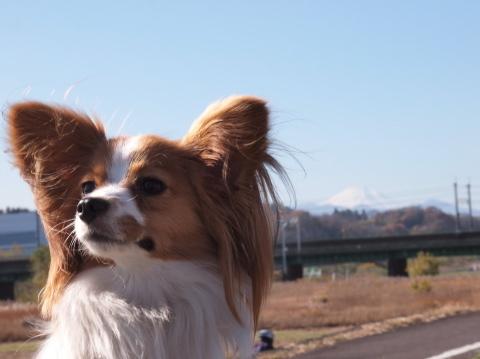 011_s_7170_18-180_liliaと富士山_fuchu_20101204.jpg