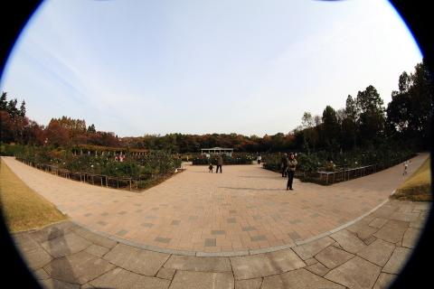 202_s_IMG_3486_60d_8-15feye_神代植物公園_20111127.JPG