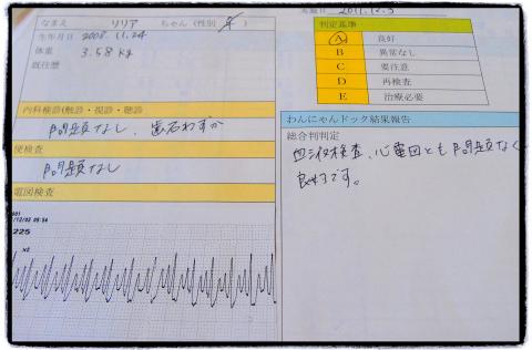 わんにゃんドッグ-1_lilia_20111203.jpg