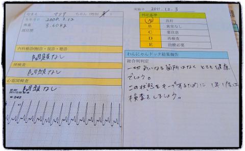 わんにゃんドッグ-1_maria_20111203.jpg