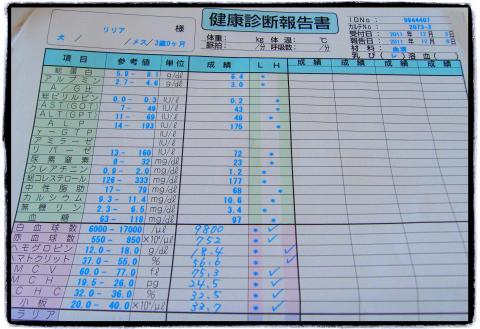 わんにゃんドッグ-2_lilia_20111203.jpg